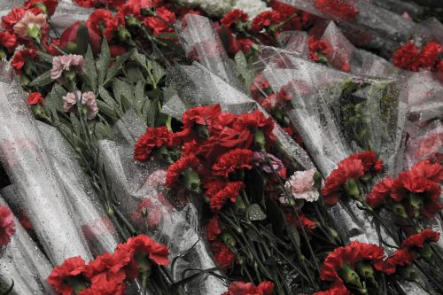 victory day carnation flowers
