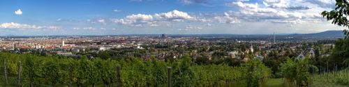vienna panorama vineyard