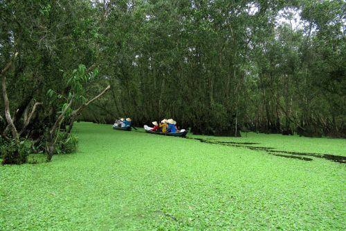 viet nam between on forest reserves of between about