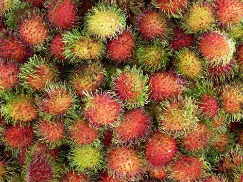vietnam asia tropical