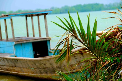 vietnam  nature  southern suburbs