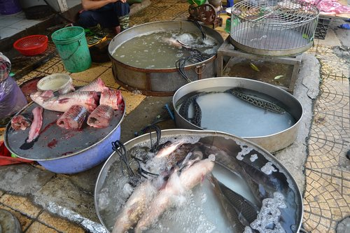 vietnam  hanoi  fish