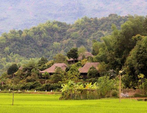 vietnamese landscape  bamboo