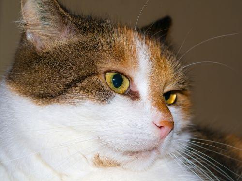 view eye cat