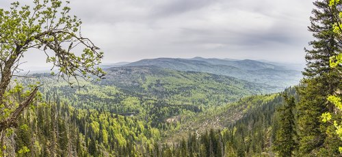 view  bavarian forest  bavaria