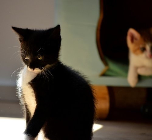 kitten  small  view