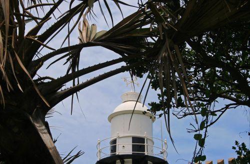 View Of Lighthouse Through Foliage