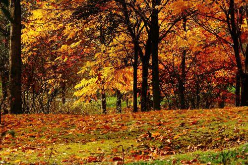 views autumn late autumn