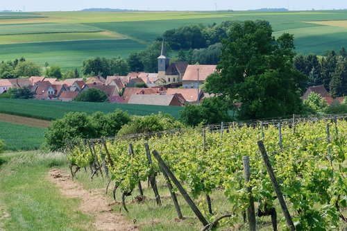 village  wine  winegrowing