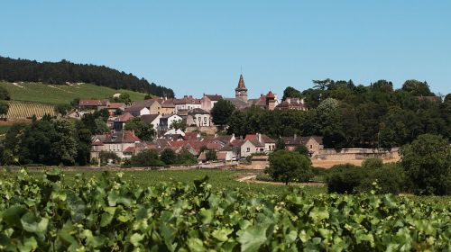 village burgundy vines