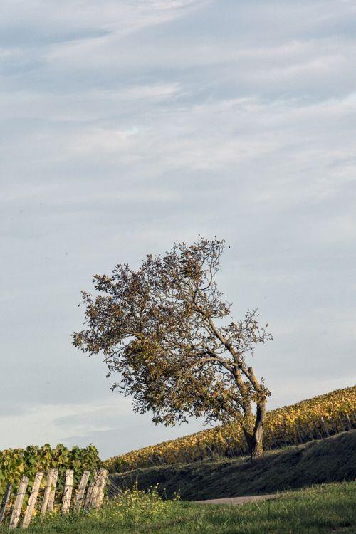 vines trees field