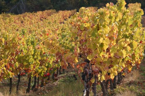 vines branch fall
