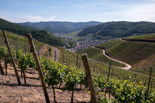 vynuogynai, vynas, vynuogių auginimas, dernau, rech, vynuogių, vynmedis, vynuogynas, Vokietija, raudonojo vyno pėsčiųjų trasa, ahr slėnis, kalnai, Highlands, slėnis