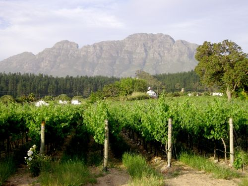 Vines And Mountains