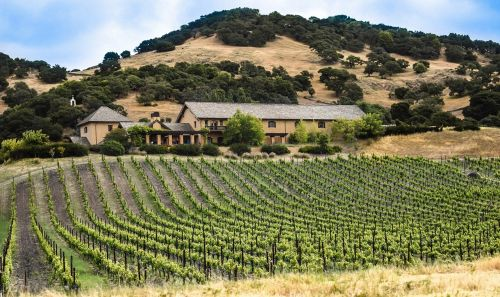 vineyard california agriculture