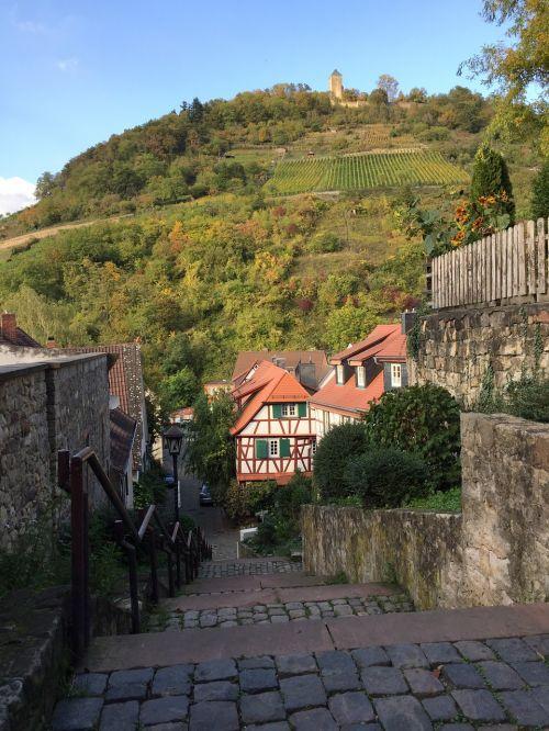vineyard hesse heppenheim