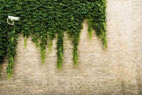vineyard surveillance brick wall