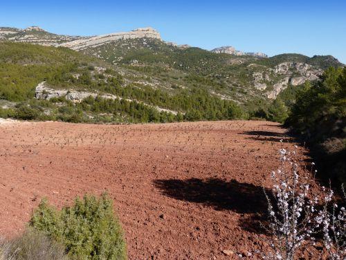 vineyard mountain vineyard priorat