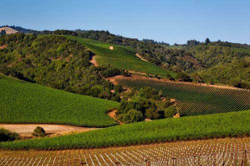 vineyard california napa valley