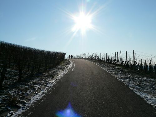 vineyard winter vine