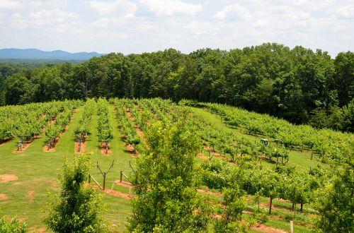 vineyard winery landscape