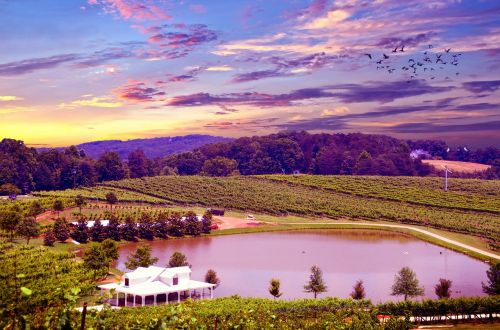 vineyard napa valley napa vineyard
