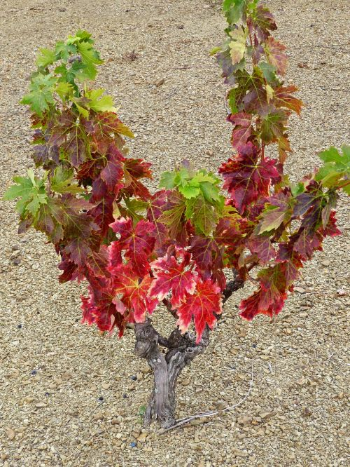 vineyard slaty ground slate
