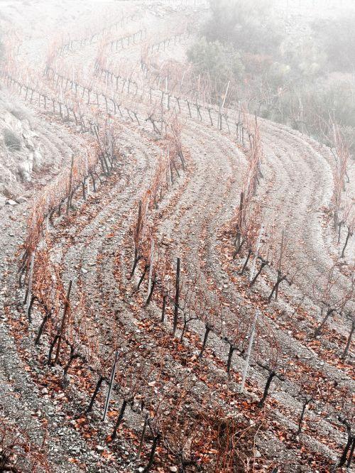 vineyard curves fog