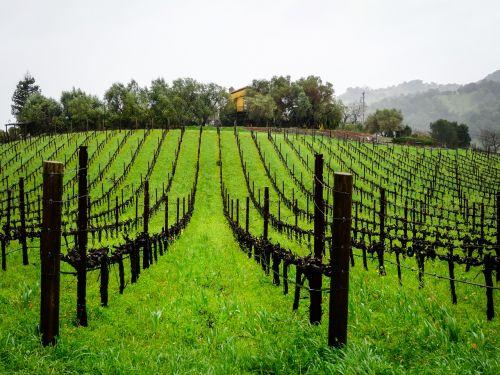 vineyard series landscape