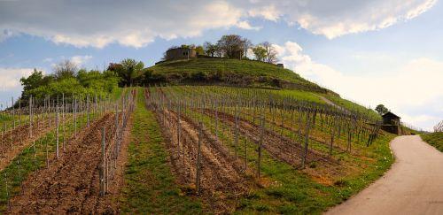 vineyard castle ruin