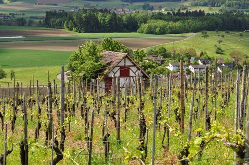 vineyard viticulture landscape