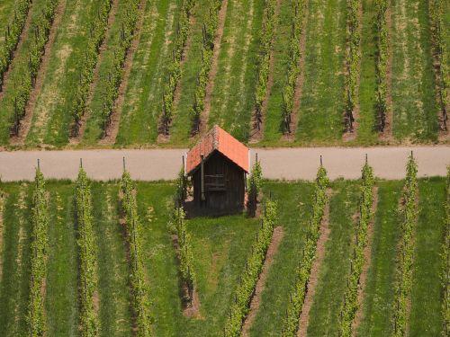 vineyard vineyard cottage vines