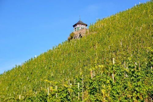 vineyard bernkastel kues wine