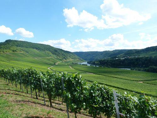 vineyard wine winemaker