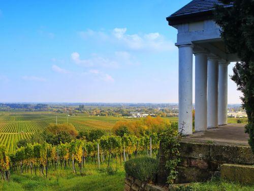 vineyard landscape autumn