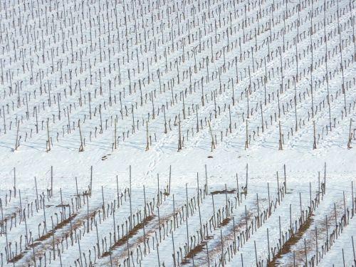 vineyard winter nierstein