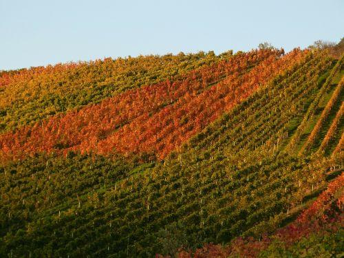 vineyard vines autumn