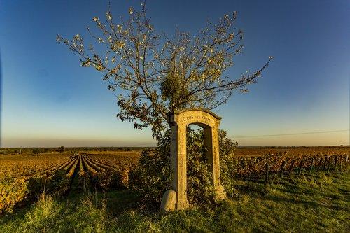 vineyard  burgundy  nature