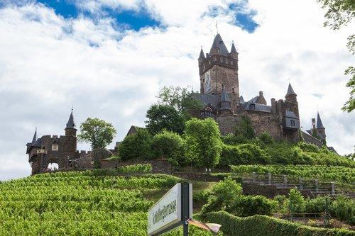vineyard  castle  winegrowing