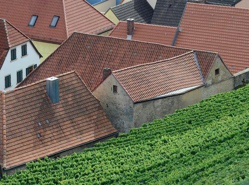 vineyard  vines  winegrowing
