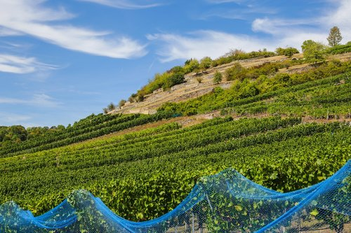 vineyard  wine  agriculture