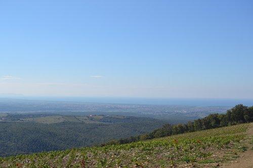 vineyard  sea  landscape