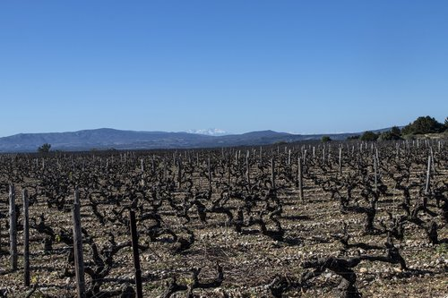 vineyard  france  winery