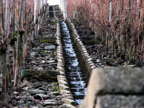 vineyard winter water