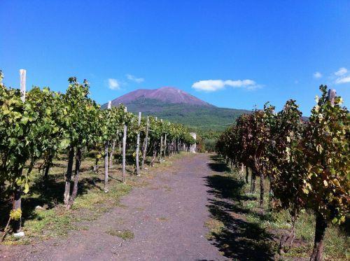 vineyard volcano vesuvius