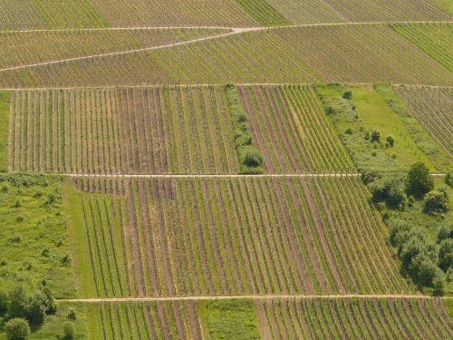 vineyard winegrowing wine