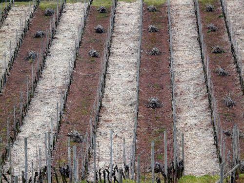 vineyard structure vineyard in winter
