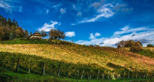 vineyard landscape wine growing area