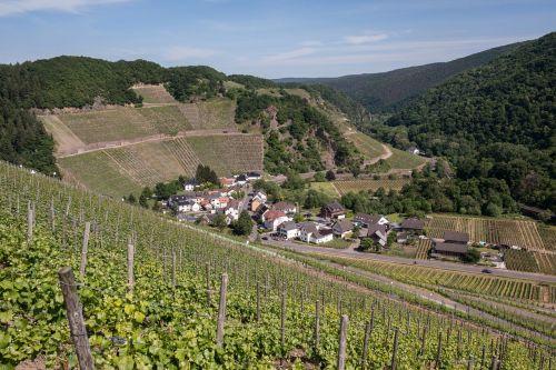vynuogynas, vynas, vynuogių auginimas, marienthal, vynuogių, vynuogynai, vynmedis, Vokietija, ahr slėnis, raudonojo vyno pėsčiųjų trasa, kalnai, Highlands, slėnis, upė