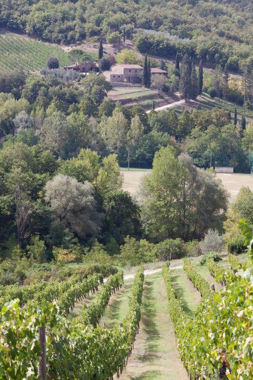 vineyard wine farm